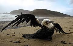 Bird Exxon